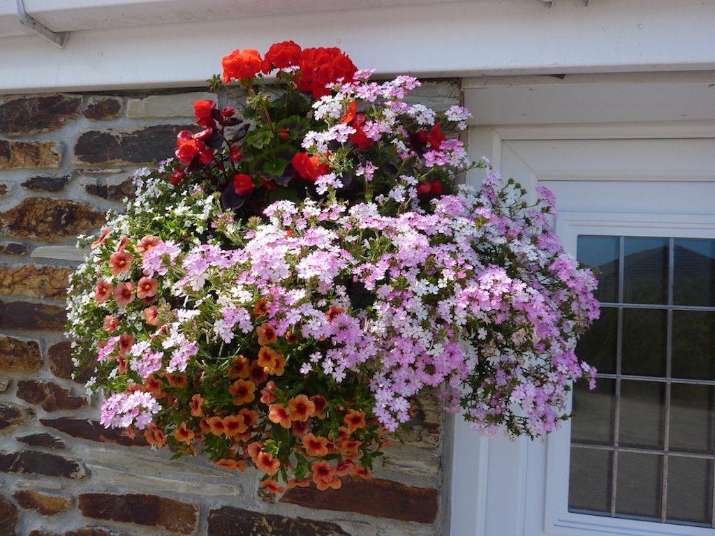 flowers july a