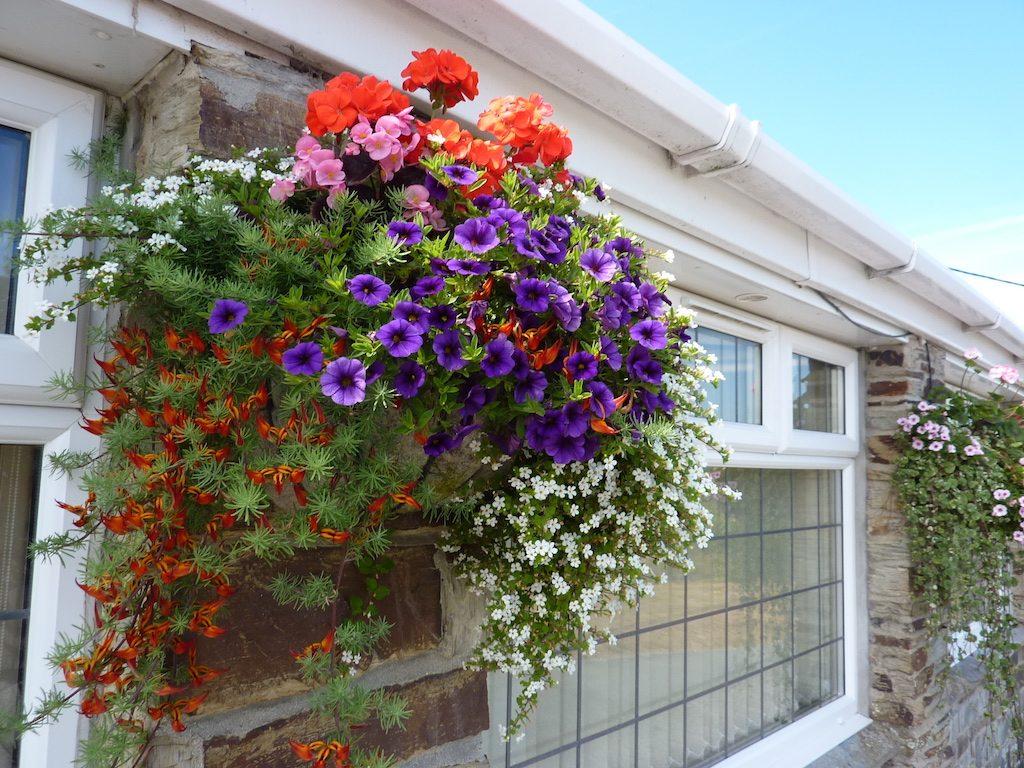 flowers july b